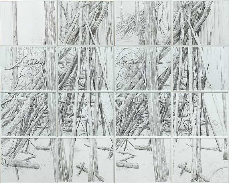 Forest 1, Bleistift auf Papier, 160 x 200 cm